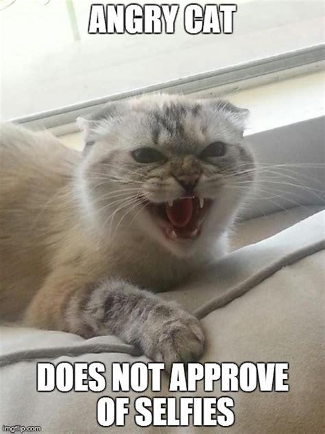 Angry Cat Meme Generator - angry cat imgflip