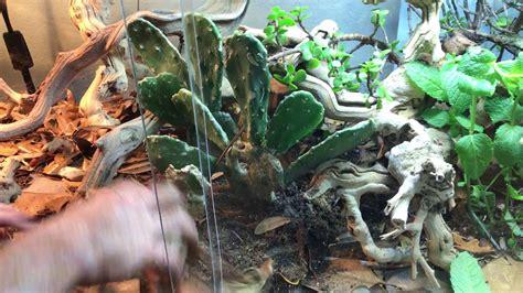 setup  bioactive bearded dragon terrarium