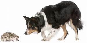 Flöhe Hund Mensch : floh check beim hund nach igel kontakt hundenachrichten floh flohbefall fl he gesundheit ~ Yasmunasinghe.com Haus und Dekorationen