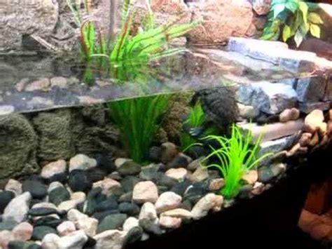 tortue aquaterrarium youtube