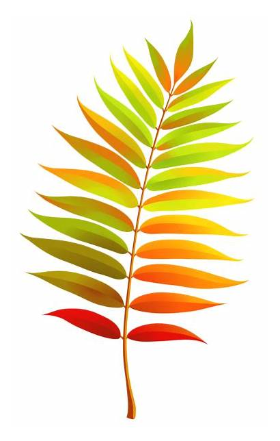 Leaf Transparent Clipart Fall Colorful Colour Yopriceville