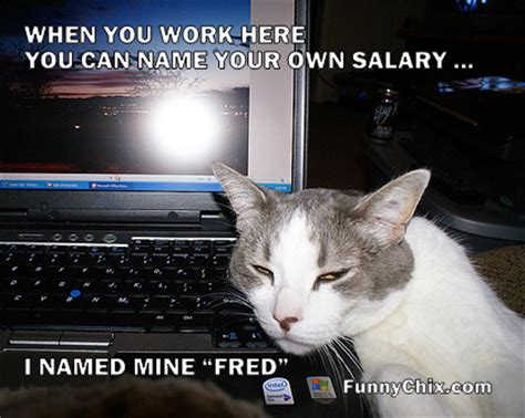 funny payroll quotes quotesgram