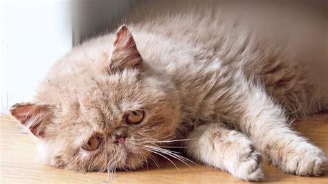 sad cat diary youtube