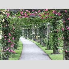 15 Best Climbing Plants For Your Pergola And Arbor Diet