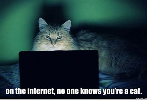 Internet Cat Meme - cats and dogs playing with computers you know who wins