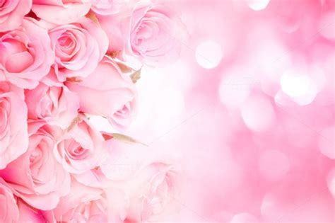 Sweet Pink Rose Background By Pinkomelet On