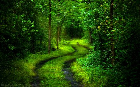Beautiful Forest Wallpaper ·① Wallpapertag