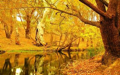 Autumn Yellow Trees Tree Wallpapers Fall Desktop