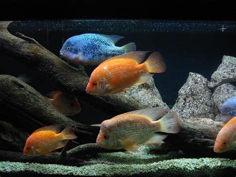 l aquarium de malo grand aquarium de malo malo 35400 ille et vilaine 35