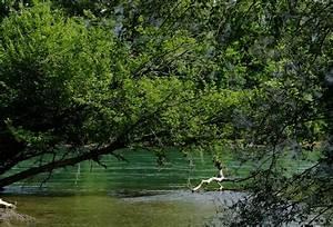 Baum Am Wasser : wie ein baum am wasser gepflanzt ~ A.2002-acura-tl-radio.info Haus und Dekorationen