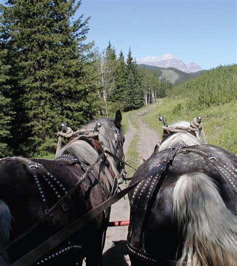 kananaskis anchor horseback country courtesy experience
