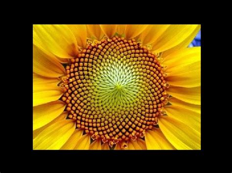geometria  la natura