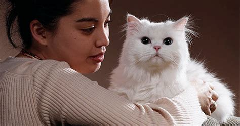 how to stop cats from shedding how to stop a cat from shedding cat and