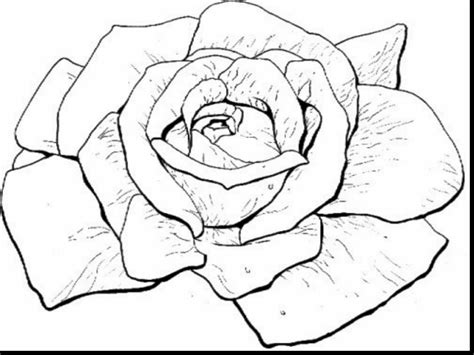 Hearts And Roses Coloring Pages Color Get This I Love You
