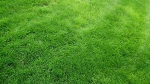 Green Grass field 4k widescreen wallpaper | HD Wallpapers