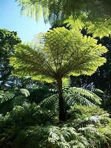 plants for shady areas stodels garden centresstodels