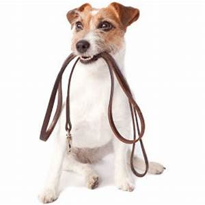 Dog walking professional dog walking and pet sitting in for Professional dog walking service