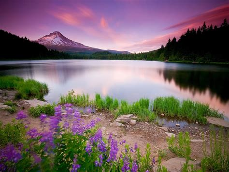 best nature wallpapers gallery