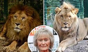Borne Free Lyon : virginia mckenna pleas for lions to return to africa nature news ~ Medecine-chirurgie-esthetiques.com Avis de Voitures