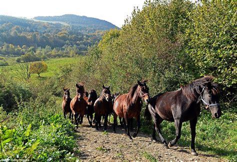 rare ponies dailym ai horse