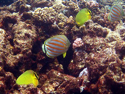 cairns underwater camera hire   great barrier reef
