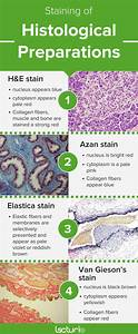 Histology  A Guide For Medical Studies