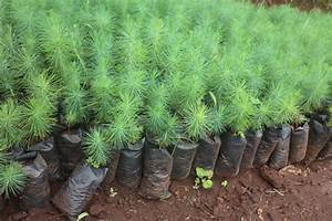 Take Good Care Of Seedlings To Grow Into Maturity