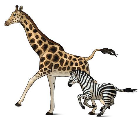 draw animals zebras  giraffes
