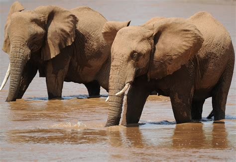 Elephant Hd Wallpaper Background Image 3588x2464 Id