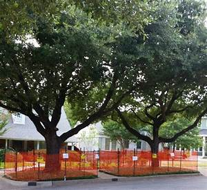 Tree Protection Is Critical During Construction