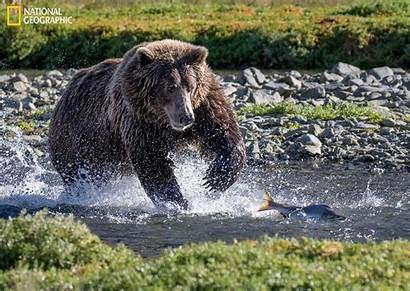 Geographic National Nature Photographer Chase Bear Brown