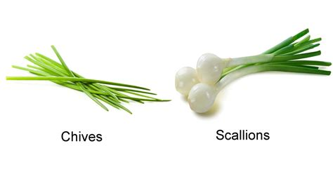 what are scallions chives vs scallions