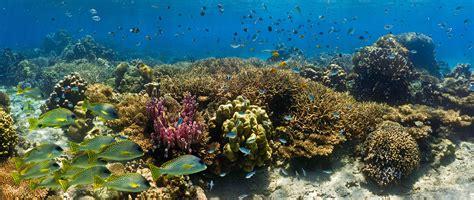shoal  fish   coral reef panorama species