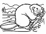 Beavers Coloringsun sketch template