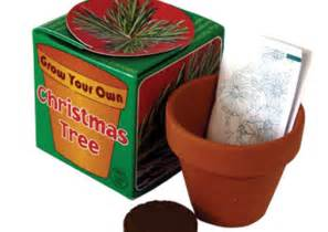 grow your own christmas tree delivermethis co uk