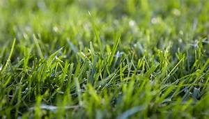 Choose the Right Grass for Your Lawn