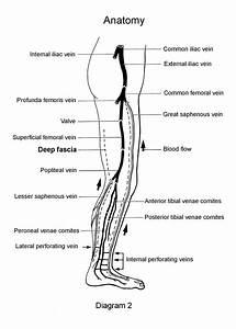 32 Arteries Of The Leg Diagram