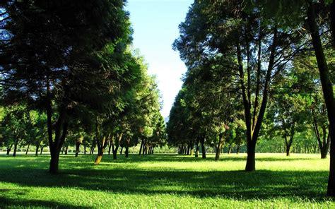 nature landscape plants photography trees park grass