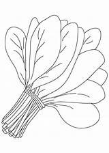 Spinach Coloring Leaves Bunch Colorir Espinafre Imprimir Desenho Drawings Sawi Mewarnai Gambar Vegetable Vegetables Frutas Cilantro Tudodesenhos Dibujos Riscos Colorear sketch template