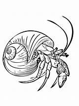 Crab Coloring Hermit Printable sketch template