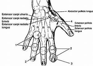 Болят суставы на ногах кости на пальцах