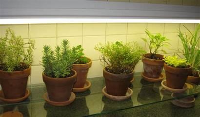 Kitchen Counter Herb Garden Lights Under Window