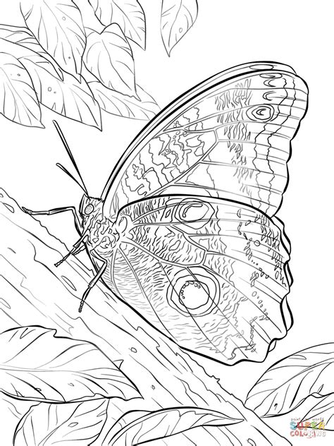 yellow edged giant owl butterfly coloring page