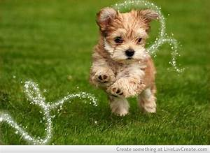 Cute X Dog Love Pretty Quotes Image 568192 On Favim Com ...