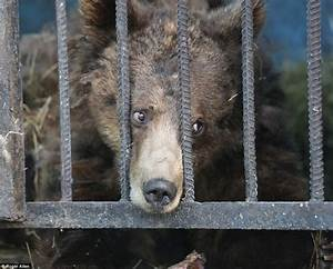 Inside the world's worst zoo: In Armenia's Gyumri   Daily ...