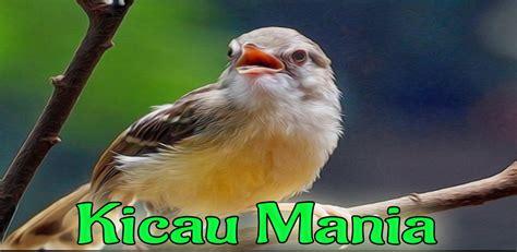 Ketahui 7 cara membedakan arwana jantan dan betina dengan mudah dan tepat sesuai prediksi. Burung Decu Kembang : Decu Kembang Jantan Dan Betina / Cara ampuh membedakan ... / Download lagu ...
