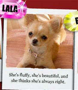Triple Points for One Week Only! Beverly Hills Chihuahua 2 ...