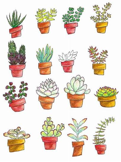 Succulents Drawing Types Succulent Plant Pots Drawings