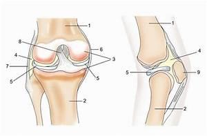 Лечение артроза коленного сустава 2 степени народными средствами