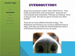 Dogs man39s best friend for How to introduce a dog to a new dog
